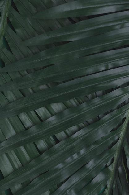 Closeup de folhas tropicais verdes Foto gratuita