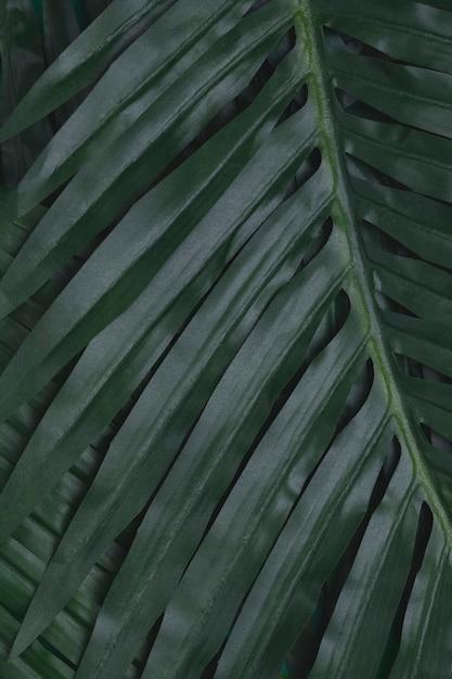 Closeup de folhas tropicais Foto gratuita