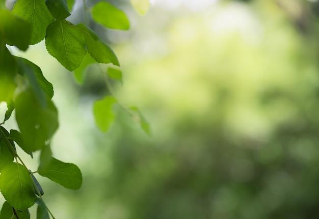 Closeup, de, natureza, folha verde, e, luz solar Foto Premium