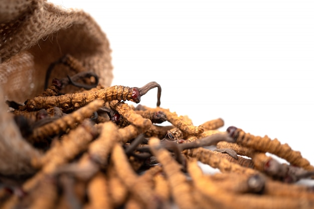 Closeup de ophiocordyceps sinensis ou cordyceps de cogumelos em saco de saco marrom no isolado Foto Premium