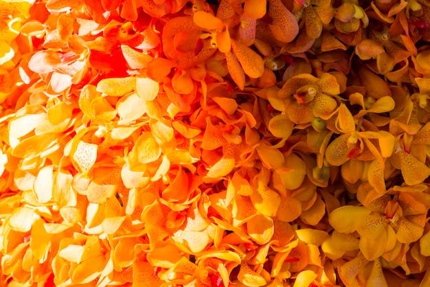 Closeup, de, orquídeas, textured, fundo Foto gratuita
