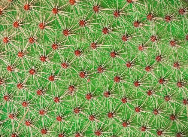 Closeup de textura de cacto Foto Premium