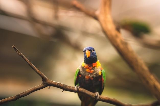 Closeup foto de foco seletivo de um papagaio tropical sentado em um galho de árvore olhando de lado Foto gratuita