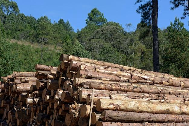 Closeup, pilha, árvore, troncos, sawmill, perspectiva Foto Premium