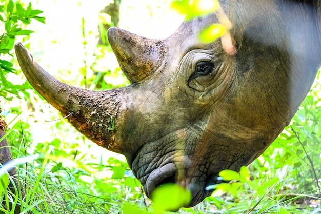 Closeup tiro da cabeça de um rinoceronte perto de plantas e uma árvore não um dia ensolarado Foto gratuita