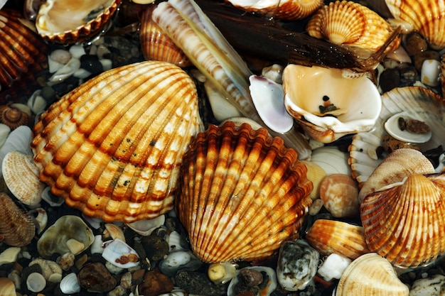 Closeup tiro de diferentes moluscos e caracóis colocados uns em cima dos outros Foto gratuita