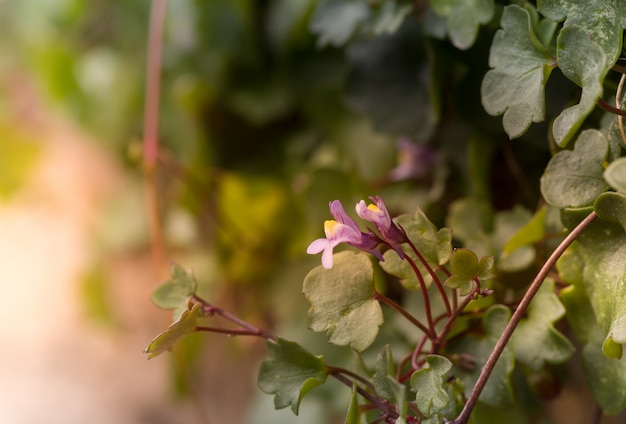 Closeup tiro de flores roxas perto de folhas verdes, com um fundo desfocado Foto gratuita