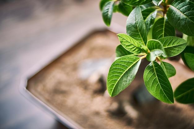 Closeup tiro de folhas verdes brilhantes com um fundo desfocado Foto gratuita
