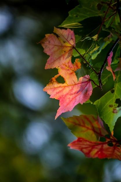 Closeup tiro de lindas folhas coloridas com buracos e turva Foto gratuita