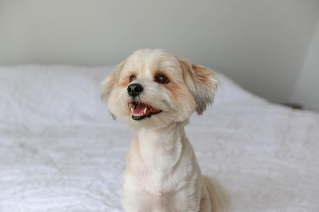 Closeup tiro de um cachorrinho branco fofo sentado na cama Foto gratuita