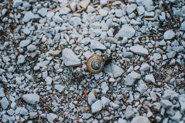 Closeup tiro de um caracol com casca em rochas em uma floresta Foto gratuita