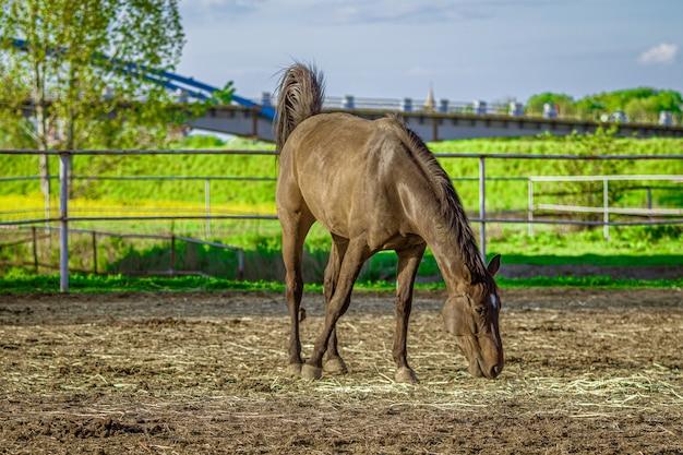 Closeup tiro de um cavalo marrom comendo grama com vegetação ao fundo Foto gratuita