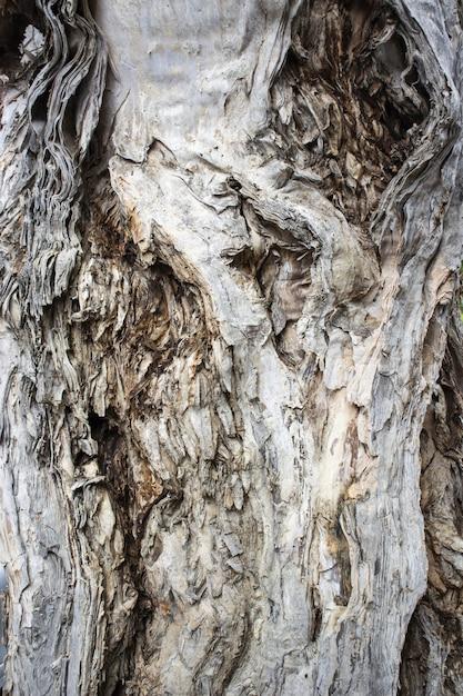 Closeup tiro de um tronco de árvore texturizado Foto gratuita