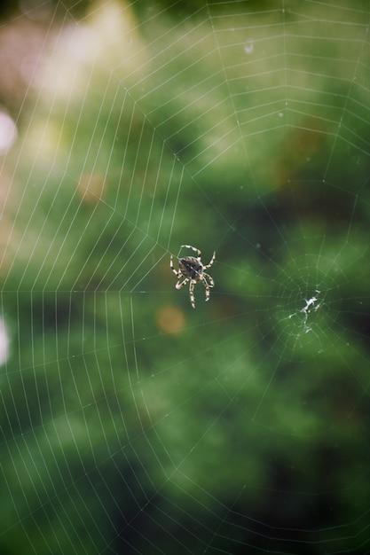 Closeup tiro de uma aranha com pernas listradas, tecendo uma teia com uma vegetação borrada Foto gratuita