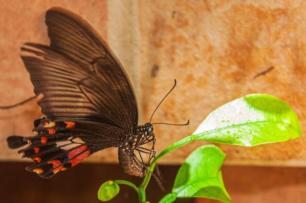 Closeup tiro de uma borboleta marrom em uma planta verde Foto gratuita
