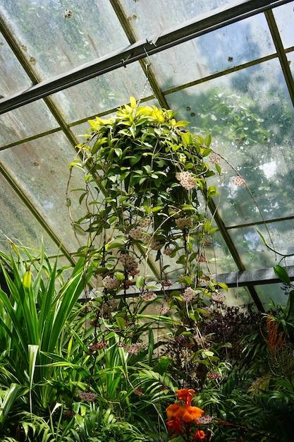 Closeup tiro de uma planta pendurada em uma estufa em um dia ensolarado Foto gratuita