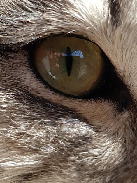 Closeup tiro do olho de um animal com pelo branco Foto gratuita