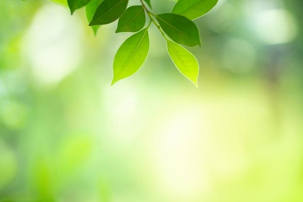Closeup, vista, de, folha verde, com, beleza, bokeh, sob, luz solar Foto Premium
