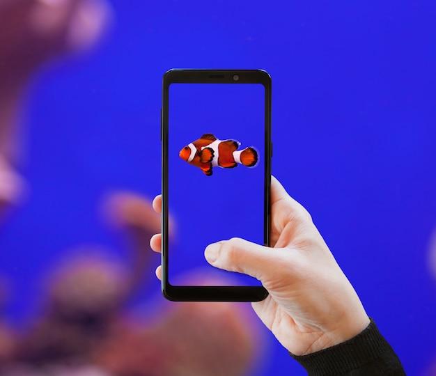 Clownfish fotografou com o telefone móvel. Foto Premium