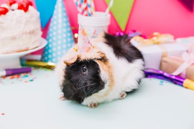 Cobaia, com, chapéu partido, ligado, seu, cabeça, sentando, perto, a, aniversário, decoração Foto gratuita