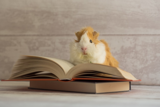 Cobaia no livro aberto Foto Premium