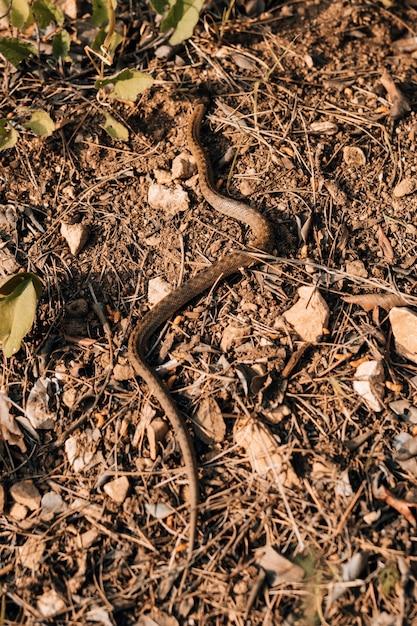 Cobra rastejando na terra durante o dia ensolarado Foto gratuita