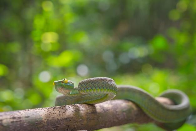 Cobra verde Foto gratuita