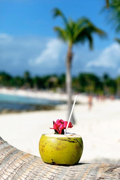 Coco com canudo em uma palmeira na praia Foto gratuita