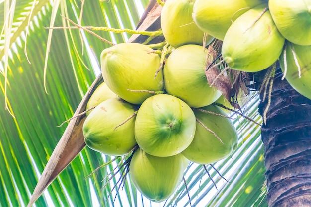 Coco, fruta Foto gratuita