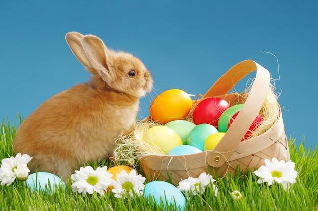 Coelhinho na cesta com ovos decorados. conceito de feriado de páscoa. Foto Premium