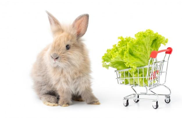 Coelho adorável do bebê que come a alface orgânica no carrinho de compras no fundo branco Foto Premium