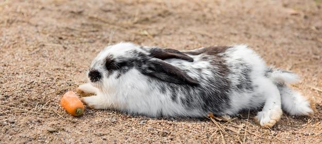 Coelho da páscoa branco grande e fofo comendo cenoura lá fora Foto Premium