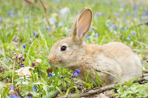 Coelho em um prado de flores. lebre selvagem no prado close-up Foto Premium