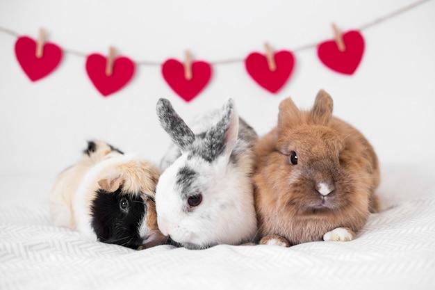 Coelhos, e, porco guinea, perto, fila, de, decorativo, corações, ligado, fio Foto gratuita