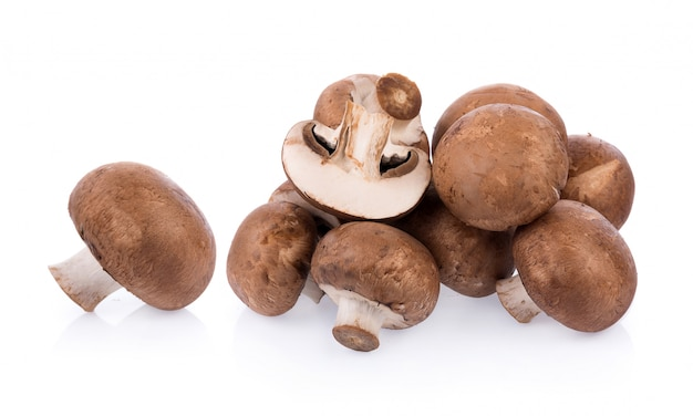 Cogumelo cogumelo isolado Foto Premium