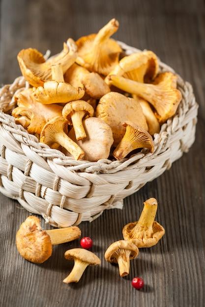 Cogumelos chanterelle Foto Premium