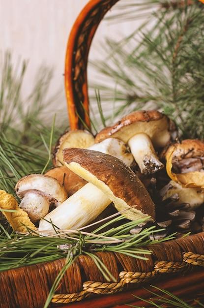 Cogumelos comestíveis, coletados na floresta em cesta de madeira. Foto Premium