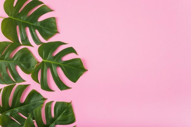 Coleção de folhas de monstera Foto gratuita