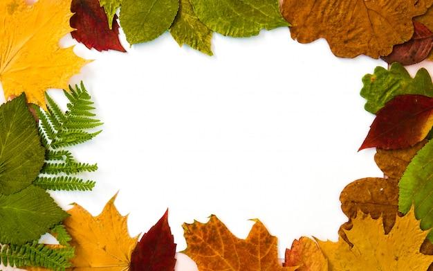 Coleção de folhas de outono na moldura de fundo branco Foto Premium