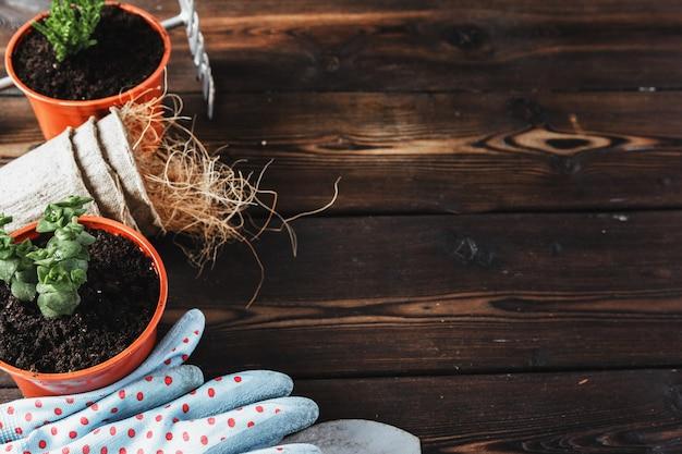 Coleção de várias plantas da casa, luvas de jardinagem, envasamento solo e espátula sobre fundo branco de madeira. fundo de plantas de casa de envasamento. Foto Premium