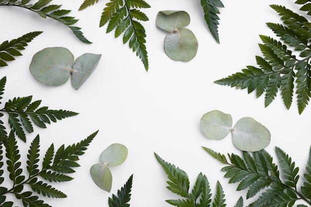 Coleção de vista superior do conceito de folhas verdes Foto gratuita
