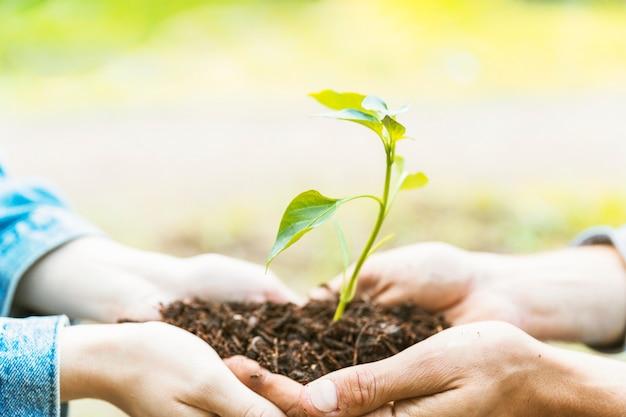 Colheita de mãos transportando solo e mudas Foto gratuita
