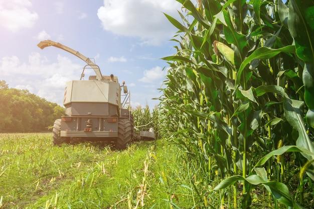 Colheita de silagem de milho suculenta por colheitadeira e transporte por caminhões Foto Premium