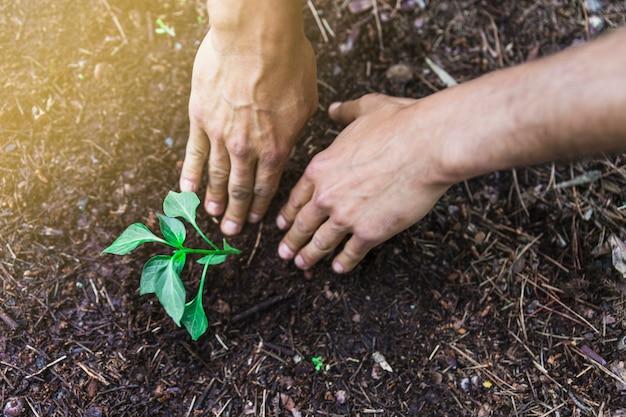 Colheita, mãos, plantar, seedling, em, jardim Foto gratuita