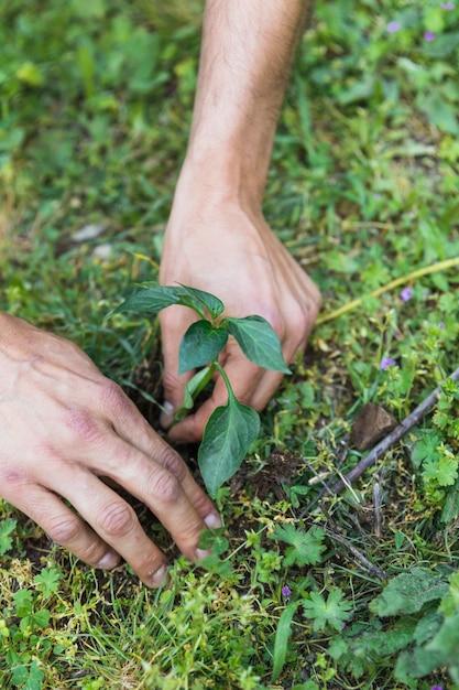 Colheita, mãos, plantar, seedling Foto gratuita