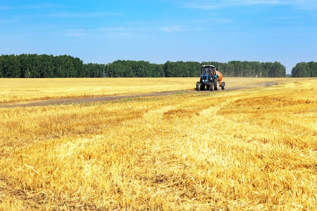 Colheita no outono, campos de trigo, trator dirigindo na estrada do campo Foto Premium