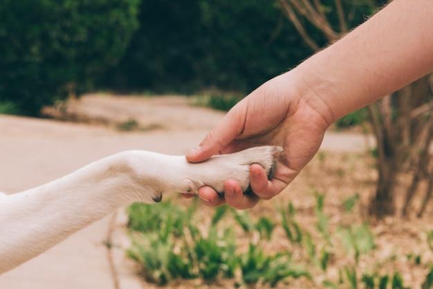 Colheita, pessoa, segurando, pata, de, cão Foto gratuita