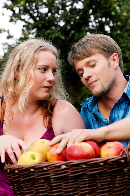 Colhendo, comendo maçãs Foto Premium