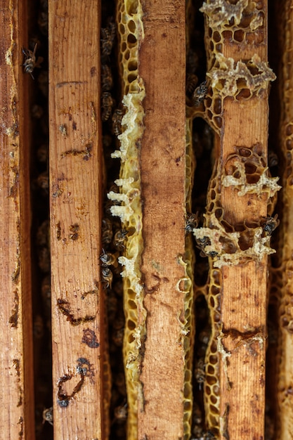 Colméia aberta com abelhas está rastejando ao longo da colméia na moldura de madeira do favo de mel. apicultura. Foto Premium