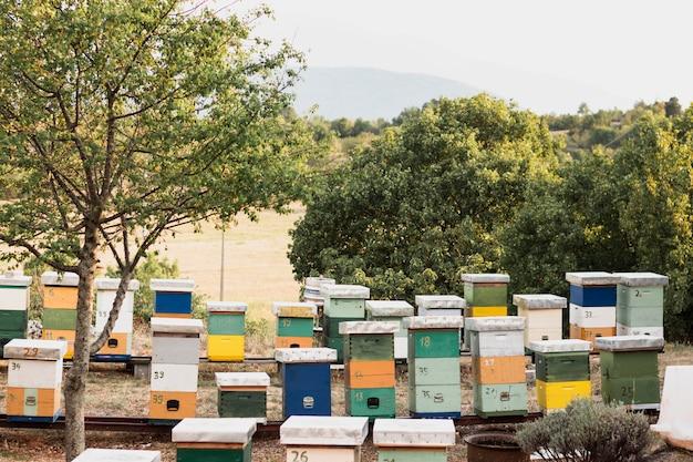 Colmeias de abelhas coloridas com árvores verdes Foto gratuita